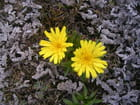 Fleurs au Cotopaxi - Gabriela Fonseca