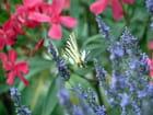 Fleurs et papillon - henri champion