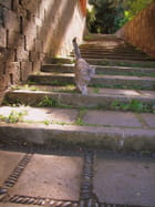 Chat aux Canaries -