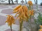 Beauté et étrangeté d'une fleur - Louis-Guy Baley