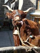 Vache Salers et son veau par Jean-Marc FOQUET sur L'Internaute