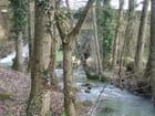 Ruisseau - Patrice PLANTUREUX