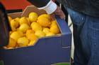 Fete du Citrons à menton (06) - André COTONNET
