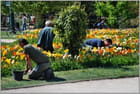 Jardiniers au travail - Jean pierre TOLOMIO