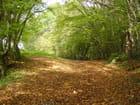 Forêt de Tronçais - Michèle Tissier