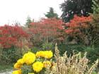 Rouge et jaune - Patrice PLANTUREUX