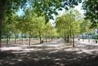 la forêt dans la ville - Genevieve LAPOUX