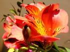 Bouquet de lys par Huguette Roman sur L'Internaute