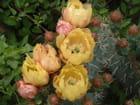 fleurs de cactus - bernadette troncy