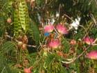 Jardin de Blanes - Fabienne Schaller