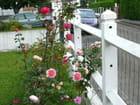 Mon jardin été 2007 N° 8 - Jacqueline DUBOIS