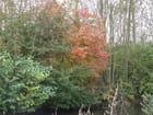 Les couleurs de l automne - Patrice PLANTUREUX