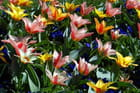 Tapis multicolore -