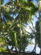 Jardin botanique de Tahiti par Philippe CONTAULT sur L'Internaute