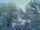 Arbres... de neige.! - Céline Méret