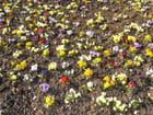 Couleurs de printemps - YOLANDE MIEL