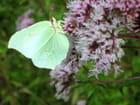 Joli papillon - claude bougard