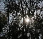 Soleil - patrick le coz