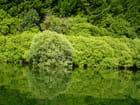 Camaïeu vert par colette remy sur L'Internaute