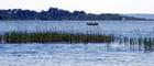 les herbes du lac - Genevieve LAPOUX