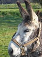 L'âne Pompon par jacqueline laval sur L'Internaute