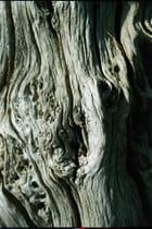 Tronc d'arbre -