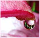 Perle de pluie sur pétale de Lys. par Marilène AVANZINI sur L'Internaute