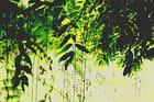 Cascade de branches de saule par Brigitte SINDING sur L'Internaute