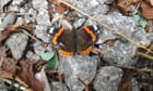 Papillon au repos - Isabelle TARAS