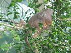 Iguane en liberté par josiane CHARLET sur L'Internaute