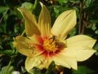 Gouttes de rosée et abeille - christelle milesi
