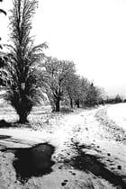 Chemin en hiver - michel roussin