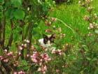 Jolie chatte par josette begard sur L'Internaute