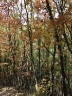 Couleurs d'automne en Provence - Jean-louis IMBERT