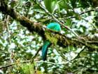 Le quetzal  -