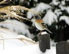Oiseau coloré - Josette GRINAND