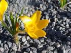 Couleurs du printemps - Isabelle TARAS