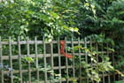 l'écureuil-3 - PHILIPPE GUILLEMOT