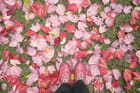 Feuilles, feuilles, feuilles...rouges - Michelle MC MURRAY