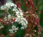 Bouquet rouge et blanc - Bénédicte LETILLOIS