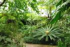Le jardin botanique - Josiane CASTREC