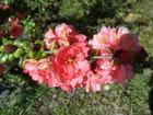 Fleur de printemps. - jean-marc puech