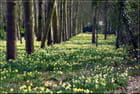 Tapis de printemps - Serge AGOMBART
