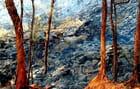 Rivière de lave en fusion par Robert MEURGER sur L'Internaute