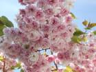 Cerisier en fleur - Béatrice PAYANT