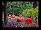 Le jardin du cloître à l'automne - géraldine deveau