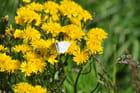 fleurs et papillon - patrice favre