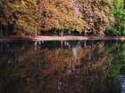 Image d'automne. - jean-marc puech
