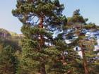 Massifs forestiers - Pont d'Espagne. - jean-marc puech