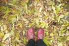 Feuilles, feuilles, feuilles...jaunes - Michelle MC MURRAY